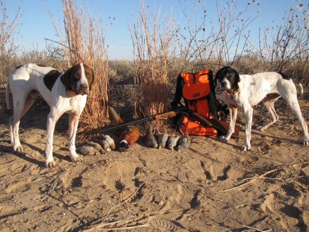 A mixed bag and two tired dogs.  Life is good.