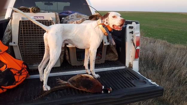 Luke's First Pheasant